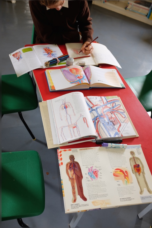 Books showing the human heart