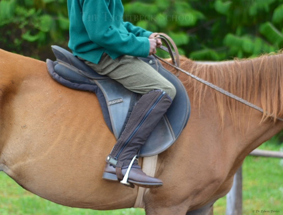 Learning about the correct riding position